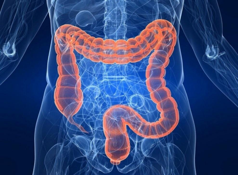 Когда праздник отгремел, стоит вспомнить о здоровье желудка и кишечника: что полезно включить в свой рацион после Нового года (хотя бы на пару дней)