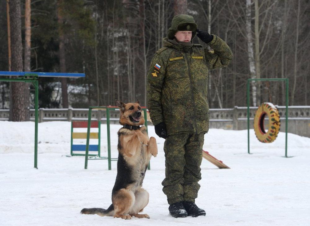 Гонки на упряжках: кинолог рассказал о новогодних занятиях с собакой