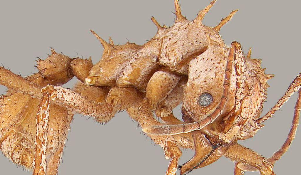 Ультрачерные рыбы и экзоскелет дьявольского жука: научные открытия 2020 года, которые ведут к новым изобретениям
