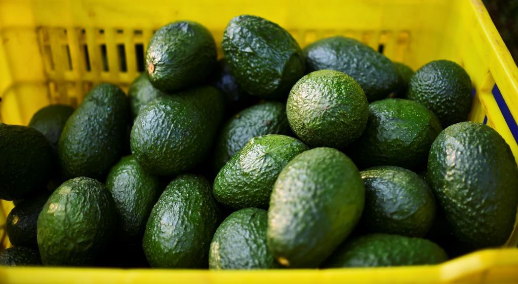 Лайфхак: как за 10 минут превратить не совсем спелое авокадо во вкусный фрукт