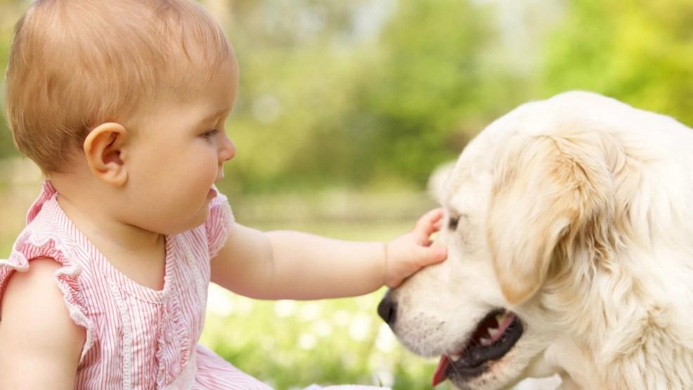 Как привить малышам любовь к животным: интересные методы
