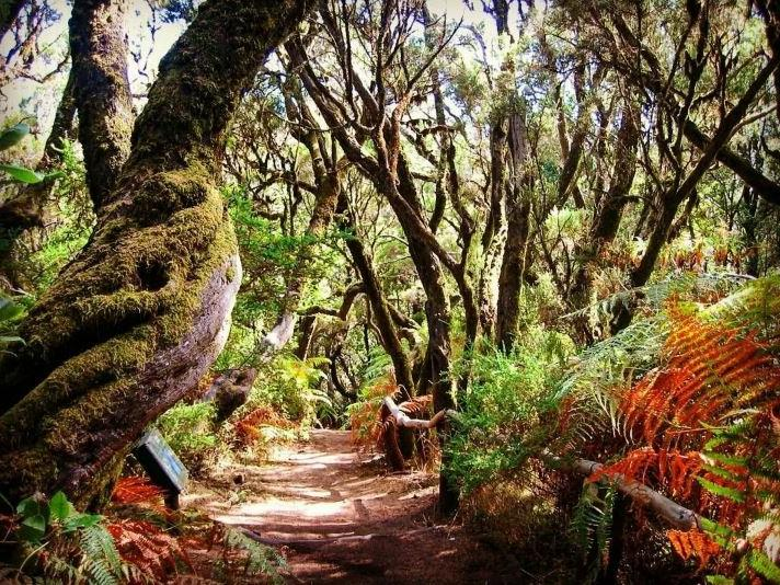 Канары – это пальмы, солнце, море, золотой песок и нет культурного отдыха: несколько распространенных заблуждений о Канарских островах