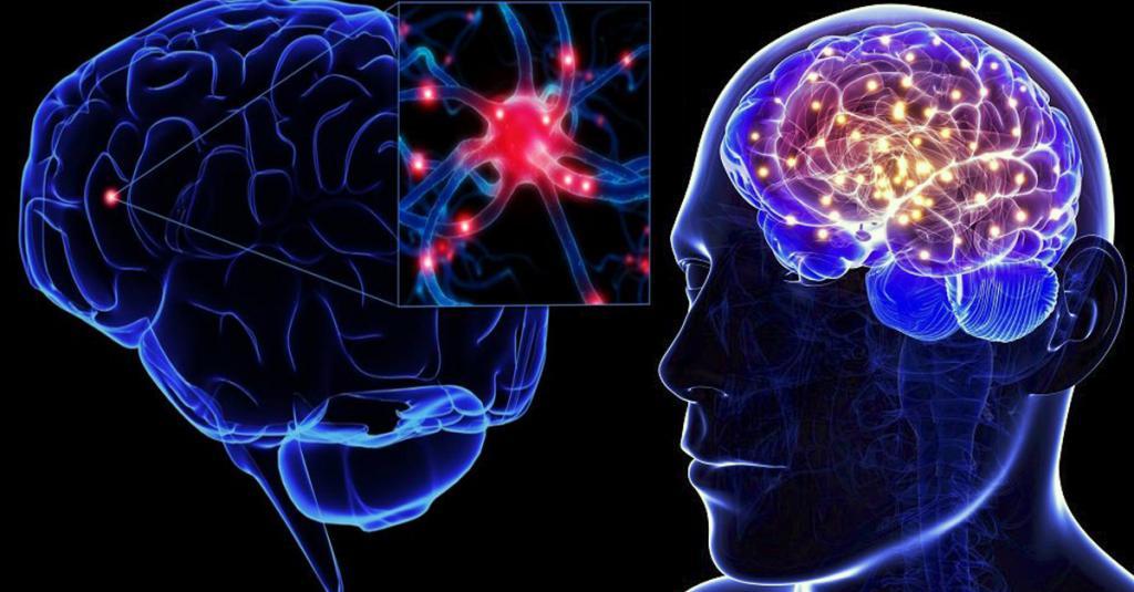Турмерон, содержащийся в куркуме, укрепляет здоровье мозга и защищает его от болезней, показывает исследование