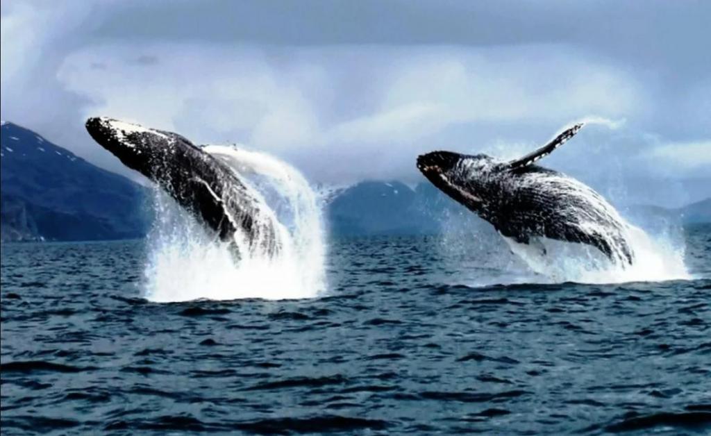 Большие животные обладают силой влиять на нашу планету: как киты поддерживают тропические леса