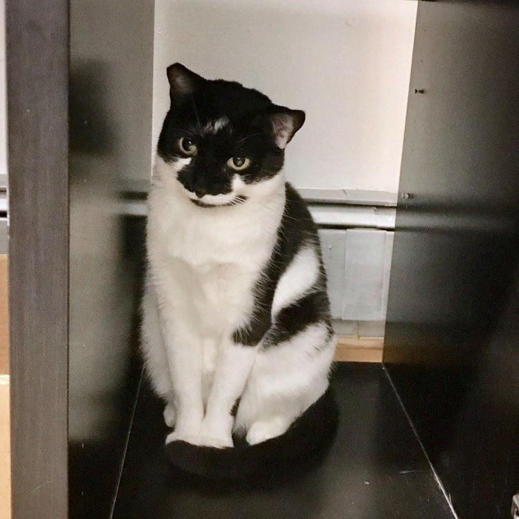 Муджи, где ты? Сбежавшая кошка 11 дней жила под потолком аэропорта Нью-Йорка