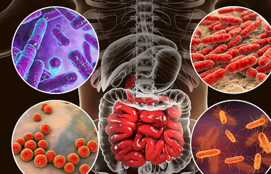 Бактерии в кишечнике влияют на иммунный ответ на COVID-19 и могут повлиять на то, насколько сильно проявляются симптомы вируса
