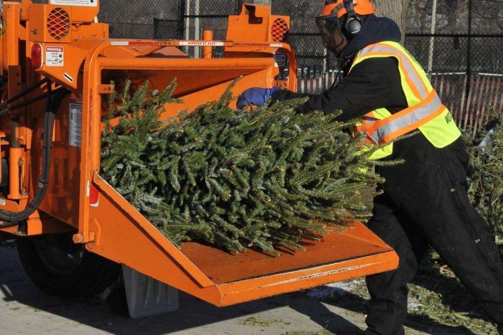 Снимайте украшения: сдать новогодние елки на утилизацию можно будет в 200 пунктах Подмосковья