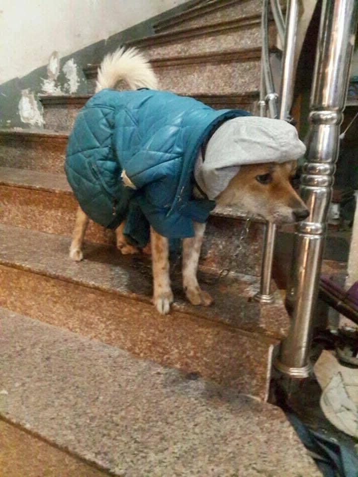 Утеплили и домашних, и бездомных: люди показали осенне-зимний гардероб братьев наших меньших (фото)