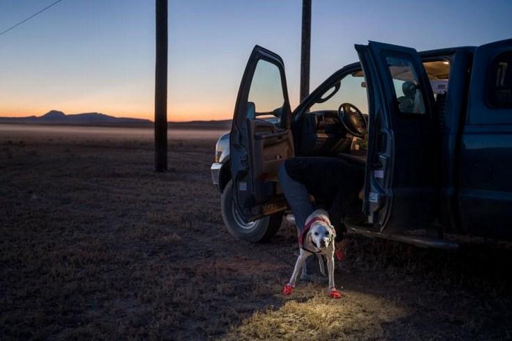 Биологи из Монтаны привлекли собак для спасения дикой природы. Натренированные псы способны учуять запах личинок размером с амебу, найти следы гризли и даже исчезающие виды цветов