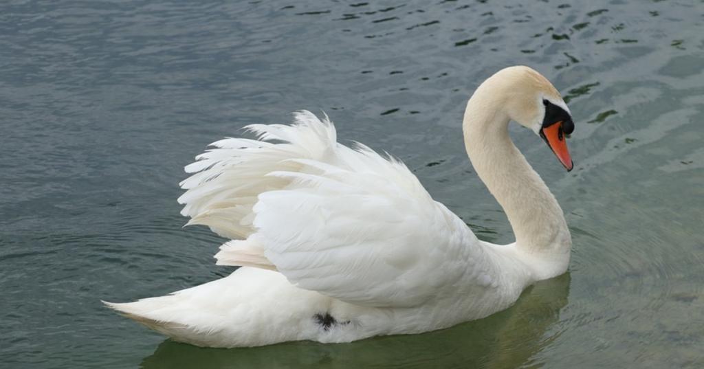 """""""Пусть не черствеют наши души"""": новые примеры отношения к животным, которые способны тронуть любое сердце"""