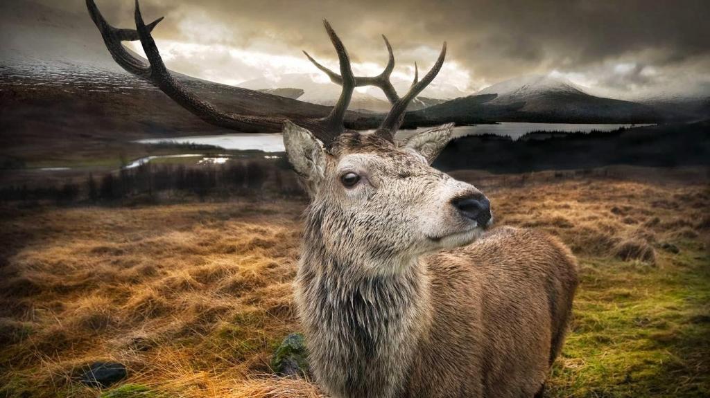 Рысь поможет контролировать популяцию оленей в Шотландии: хищника отправят туда впервые за 500 лет