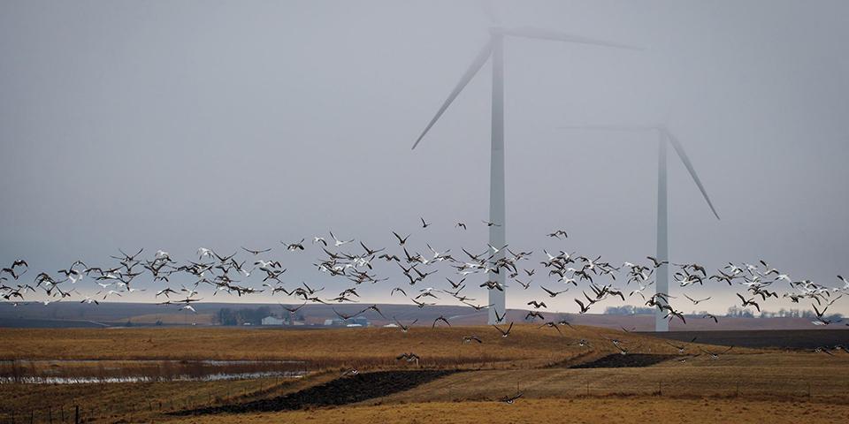 Птиц спасут от ветрогенераторов с помощью искусственного интеллекта