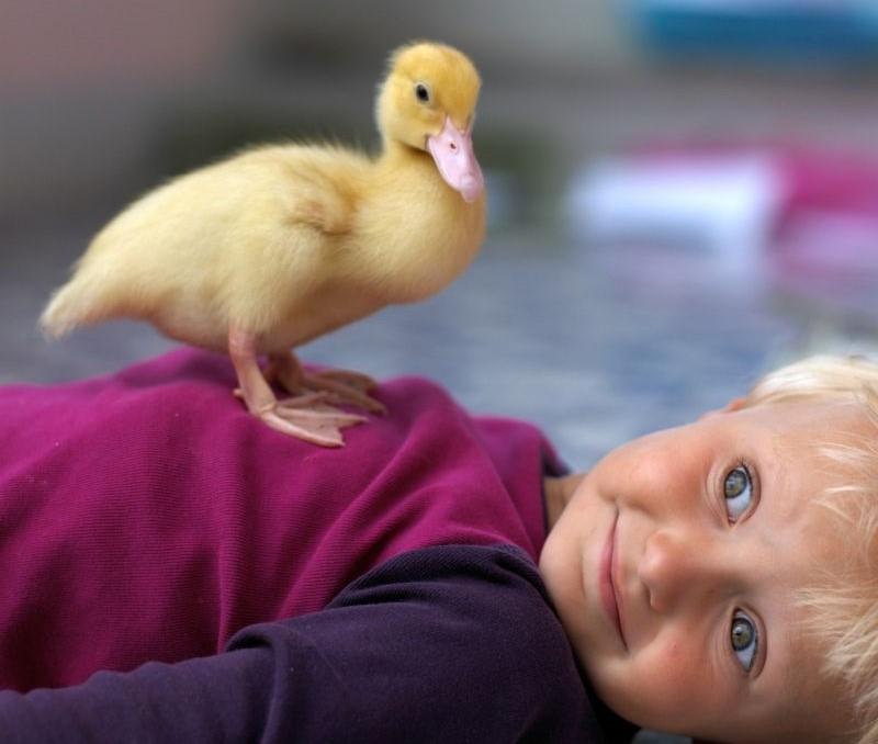 Нет ничего милее, чем маленькие дети в компании верных домашних питомцев: фотографии, которые поднимут настроение