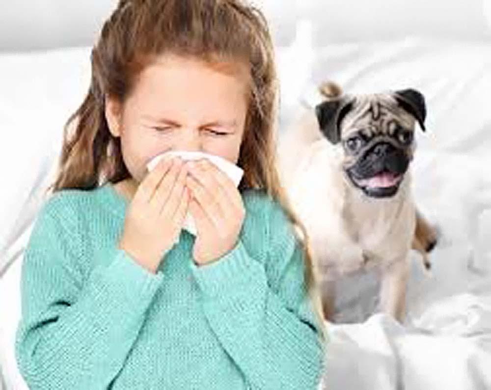 Российские ученые рассказали об уникальной вакцине от аллергии на кошек, собак, грызунов и гепатита В