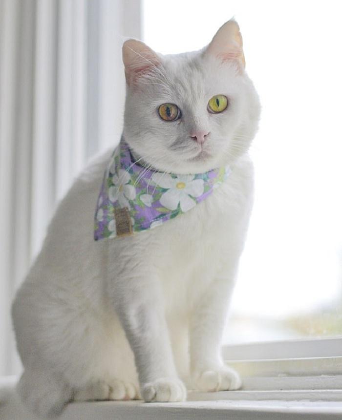Хозяйка показала очаровательную кошечку, у которой в зависимости от погоды меняется оттенок глаз