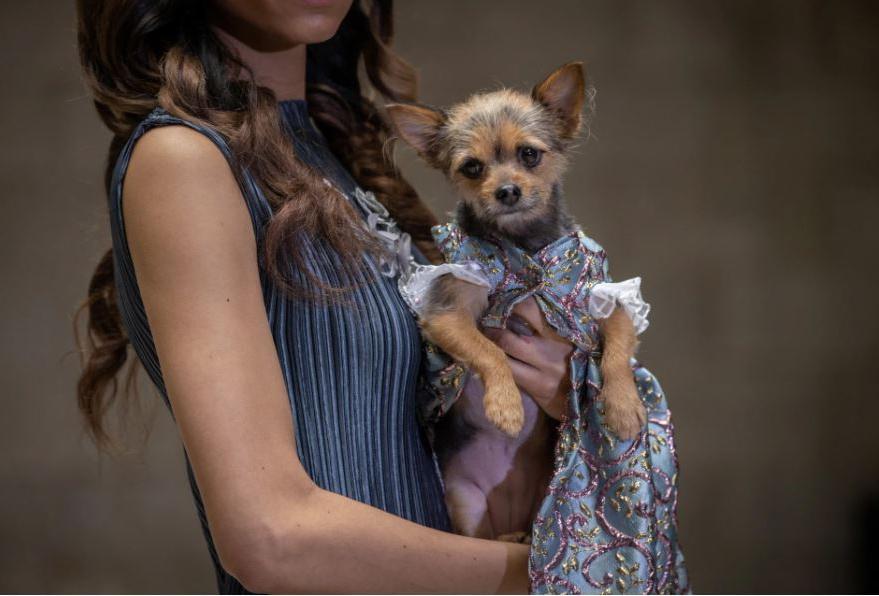 В нарядах от кутюр: собачек из приюта животных показали на Нью-Йоркской неделе моды