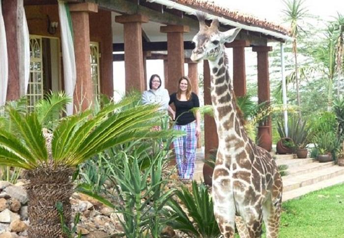 «Что б я так жил»: нынешней жизни спасенного жирафа можно завидовать вечно