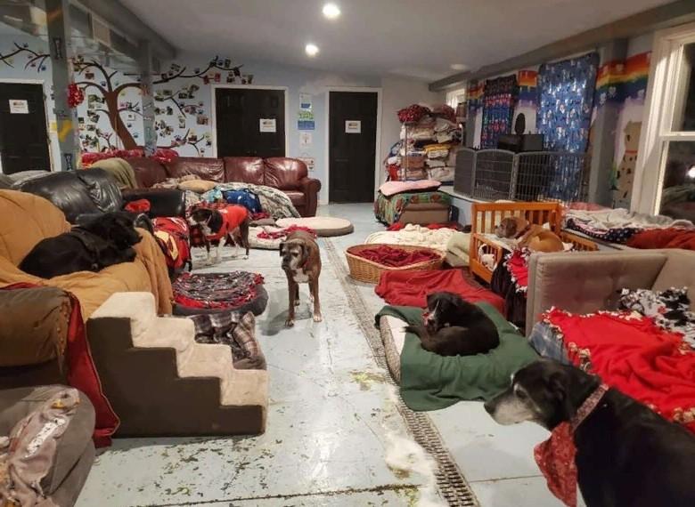 """""""Мы обязательно подходим к каждой собаке, укладываем ее, желаем спокойной ночи"""": работники приюта о своих подопечных"""