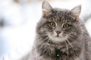 Кошки настолько же умны, как медведи, но глупее собак