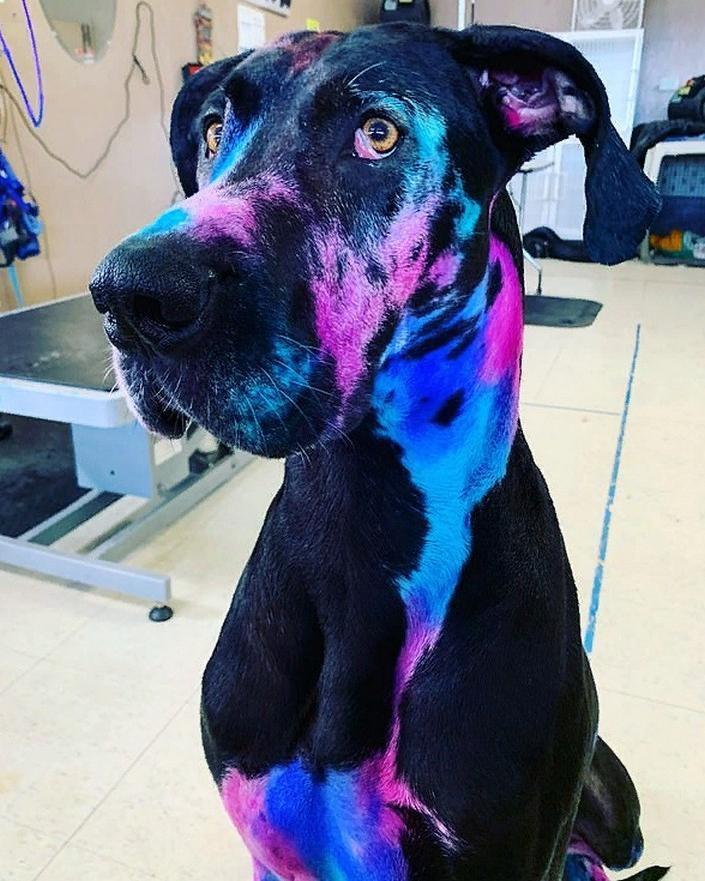 Галактический дог: девушка-грумер разрисовала свою собаку так, что многие задумываются о ее внеземном происхождении