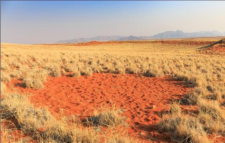 Загадка африканского волшебного круга разгадана: странные пятна в травянистой пустыне Намибии вызваны ядовитыми соками, использующимися в отравленных стрелах