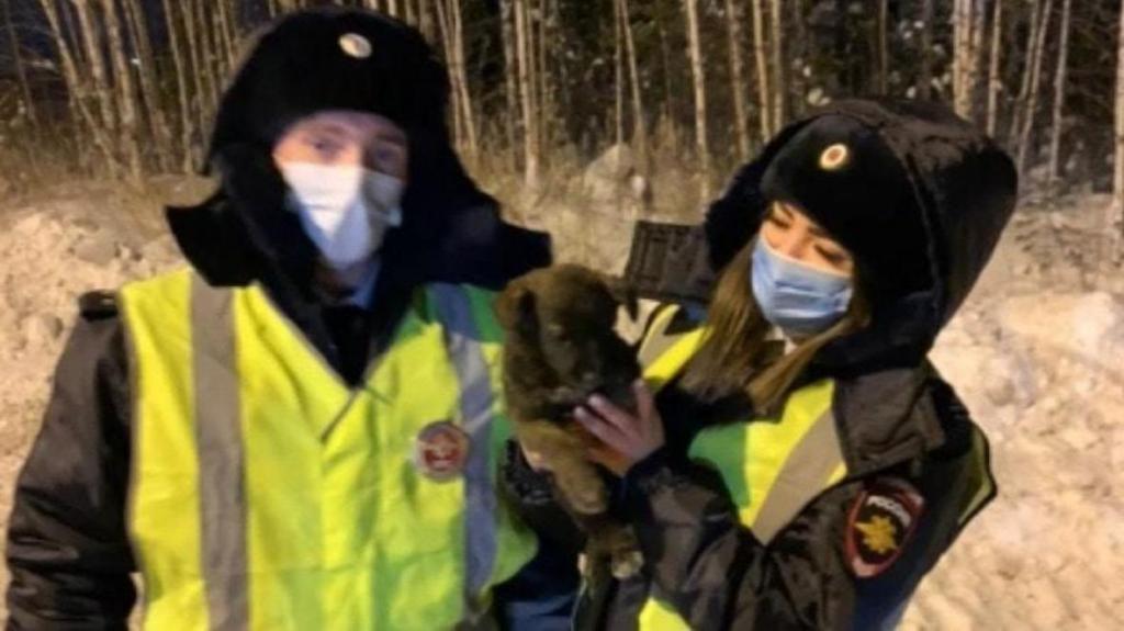 Тот случай, когда за полицейских берет гордость: щенок по кличке Счастливчик, найденный под капотом авто, обрел хозяев (видео)