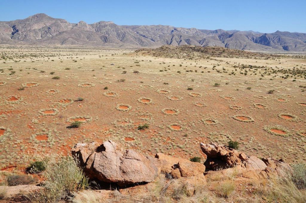 Ученые из Санкт-Петербурга разгадали тайну «ведьминых кругов» в Намибии