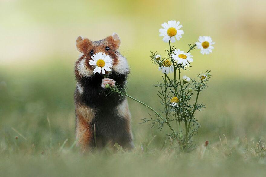 """У австрийского художника более 100 000 подписчиков в """"Инстаграм"""". Он делает потрясающие снимки белок, хомяков и других животных в их обычной среде обитания"""
