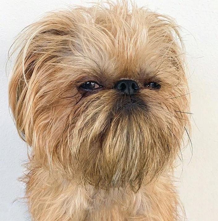 """Пожалуй, это самый """"недовольный"""" пес в мире: забавные фото"""