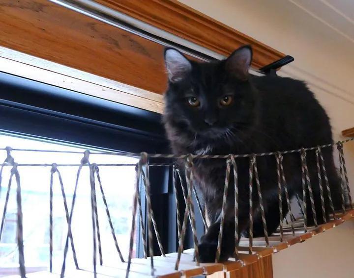 Люди заметили пушистый комочек в куче сухих листьев: теперь это красавец кот, живущий в любящей семье