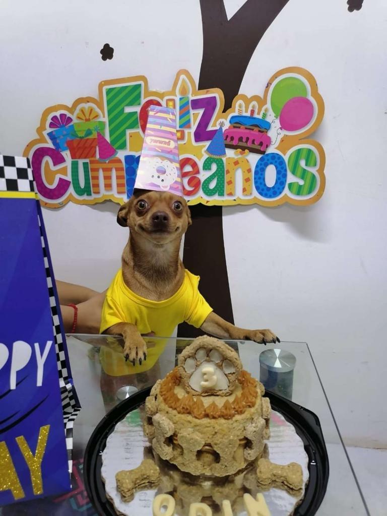 Хозяева не забыли про третий день рождения своей собачки: ее реакция на торт бесподобна (фото с праздника)