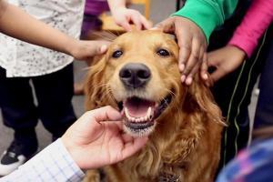 Собаки демонстрируют больше эмоций, когда мы на них обращаем внимание