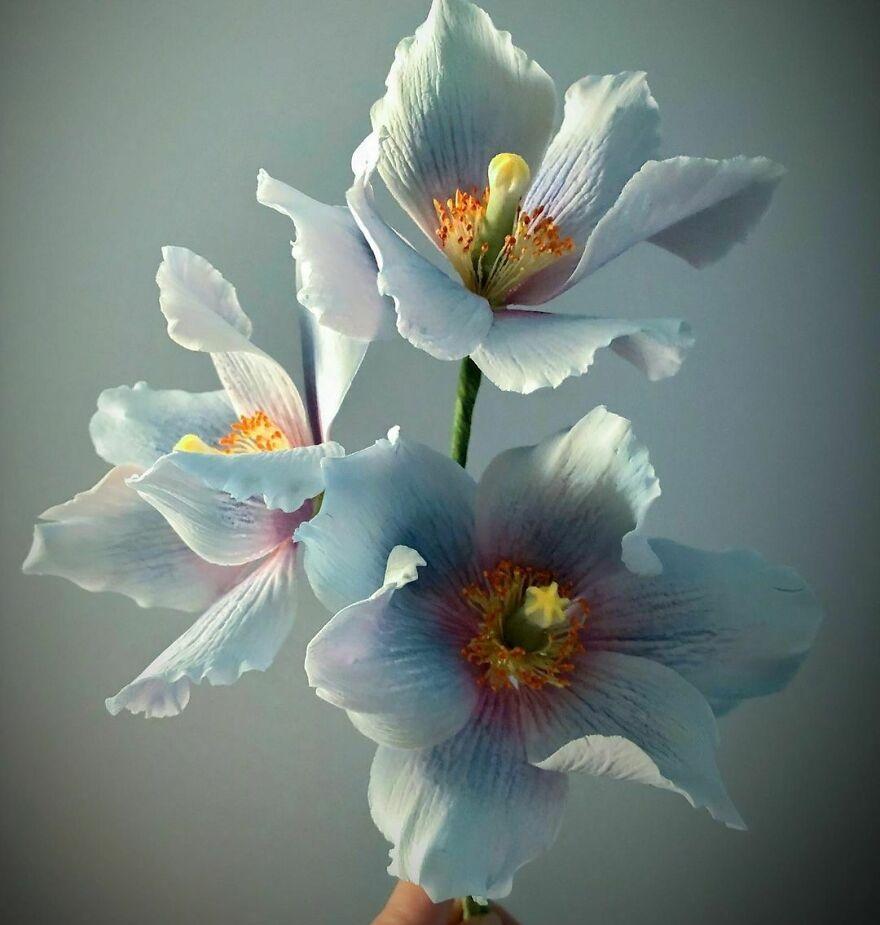 Австралийский художник создает потрясающе реалистичные сахарные цветы (фото)
