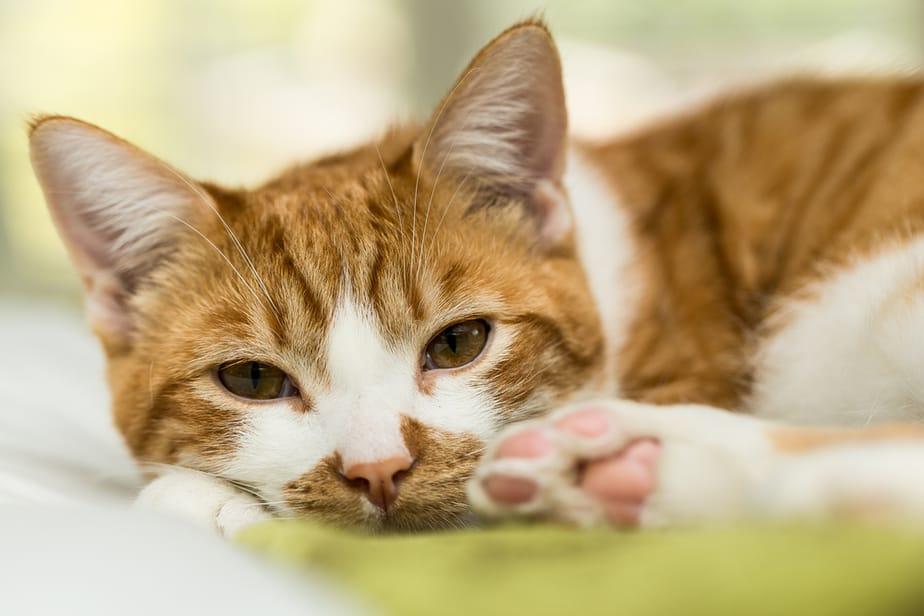 Мурчание кошек и не только: россияне назвали звуки, которые успокаивают их больше всего