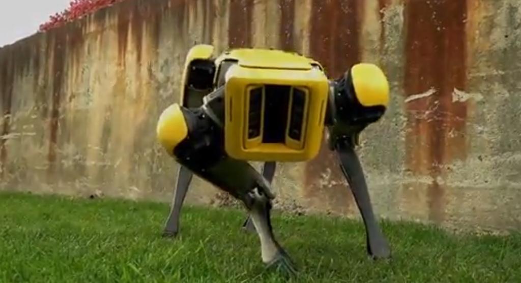Странная прогулка: девушка выгуливает собаку-робота по имени Лоскуток на пляже во Флориде (фото)