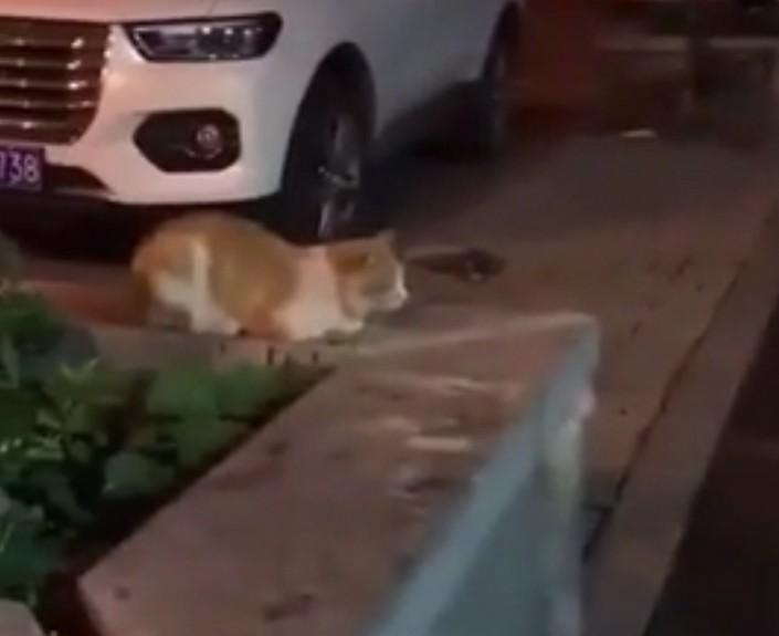 Как собаки предотвратили кошачий конфликт: смешное видео
