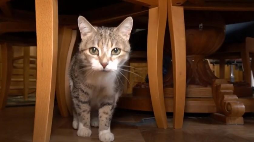 Из документов у них только лапы и усы: в Петербурге проходит перепись котов, которые живут в театрах, музеях и библиотеках