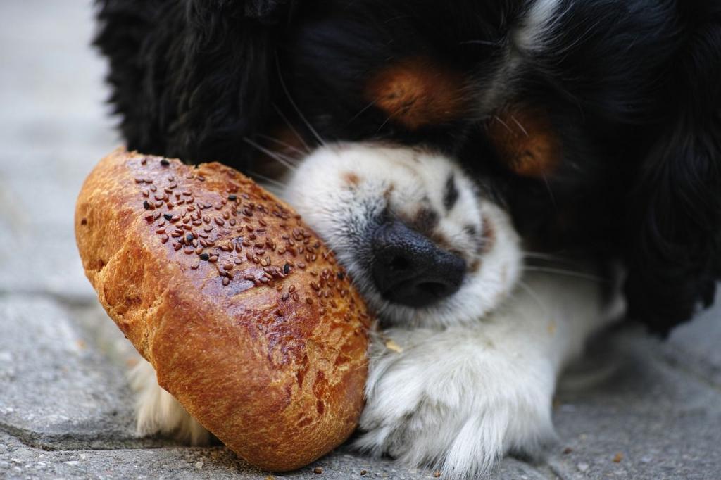 Безопасно ли давать собакам хлеб? Не все так однозначно и зависит от сорта