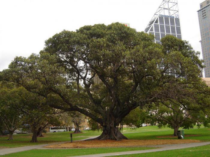 Возле деревья сексом занимались