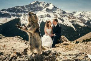 Лучшие фотобомбы, которые сделали день свадьбы еще более запоминающимся