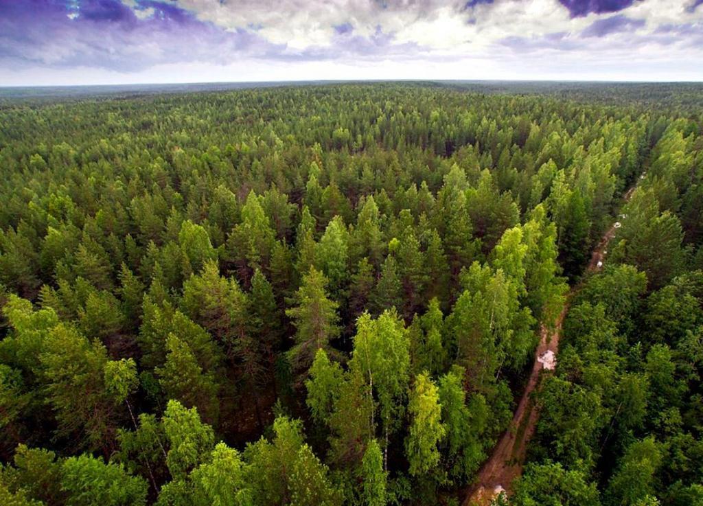 Миллион гектаров за два миллиарда рублей: сколько будет стоить восстановление утраченного в России леса