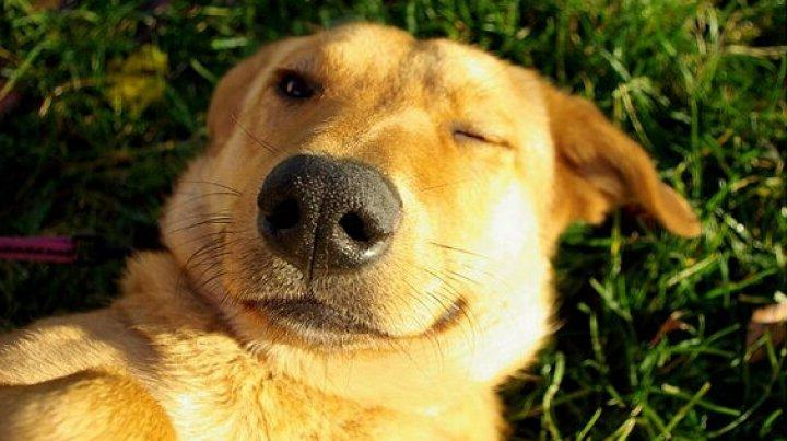 Формула «Кошки и собаки»: практикующий тренер по стилю жизни делится методом улучшения качества сна