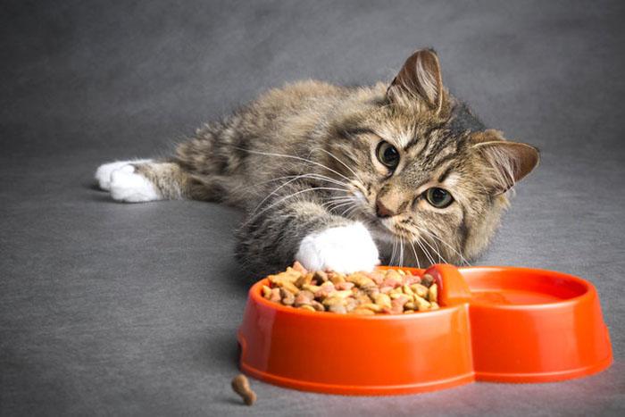 Одним нравится есть в одиночестве, а другие очень жадны до еды: странные кошачьи «ритуалы» принятия пищи