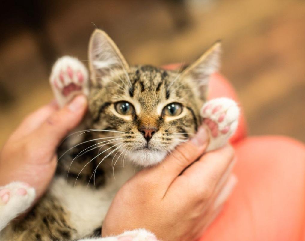 Не каждый немец решится завести кошку, ведь не все могут соответствовать установленным требованиям (а бездомное животное в Германии просто не найти)