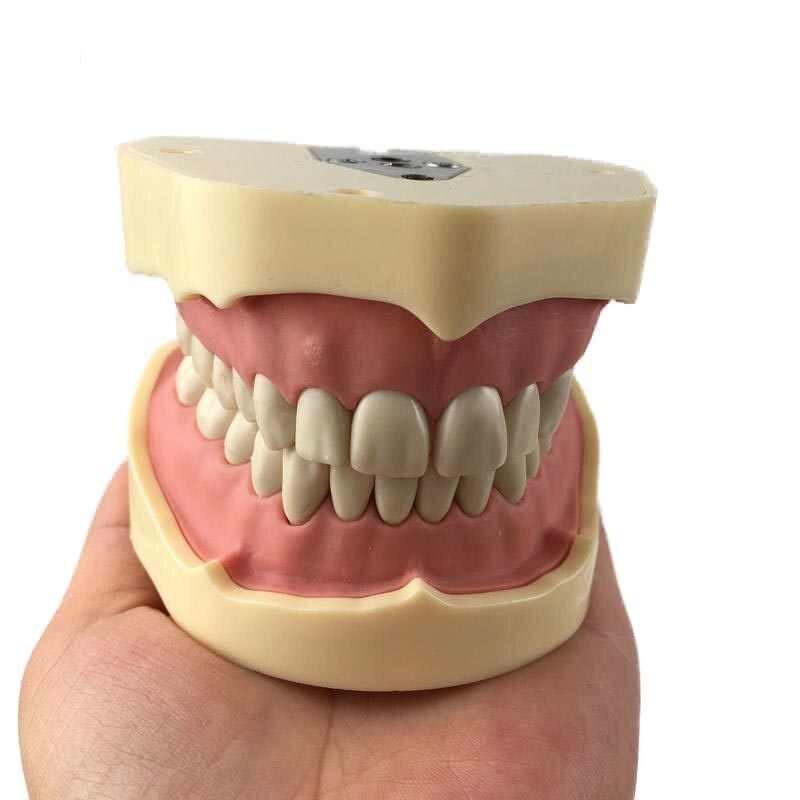 Ученые из Японии придумали, как выращивать зубы