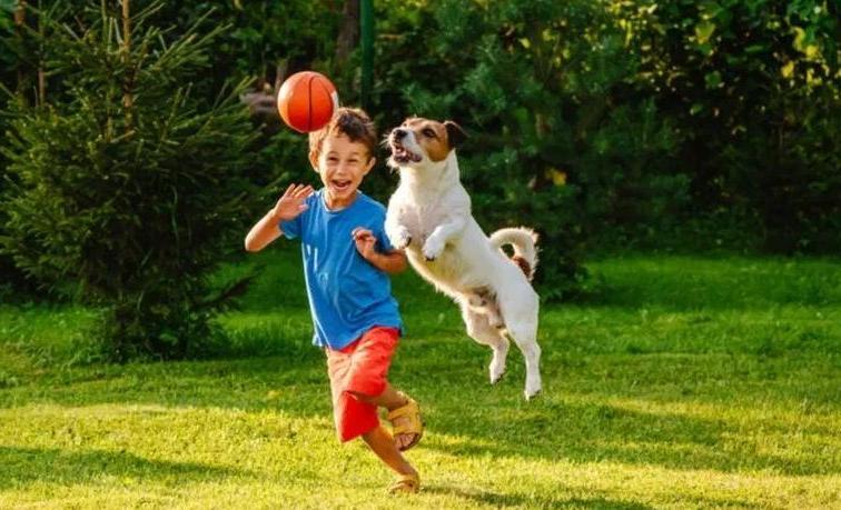 Когда собаке скучно, возникают неожиданные проблемы: причина, по которой нужно чаще играть со своим питомцем