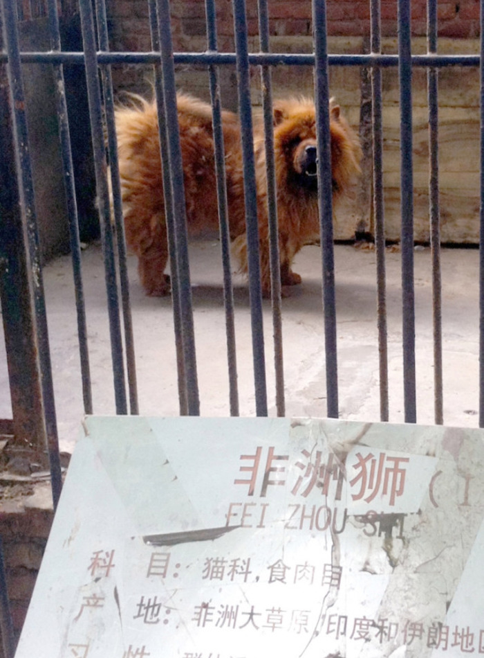 Пять случаев, когда зоопарки выдавали обычных животных за экзотических и были разоблачены