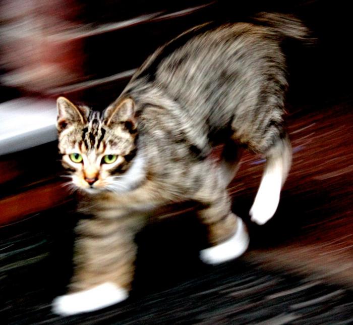 Почему кошки и собаки иногда бегают как сумасшедшие без явной причины: ответ американского ветеринара