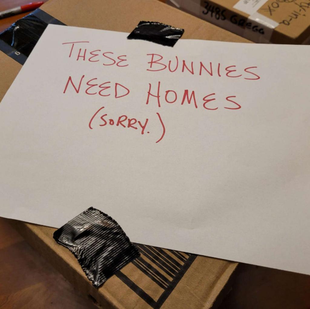 «Этим кроликам нужен дом!»: ветеринары нашли коробку с запиской у входной двери
