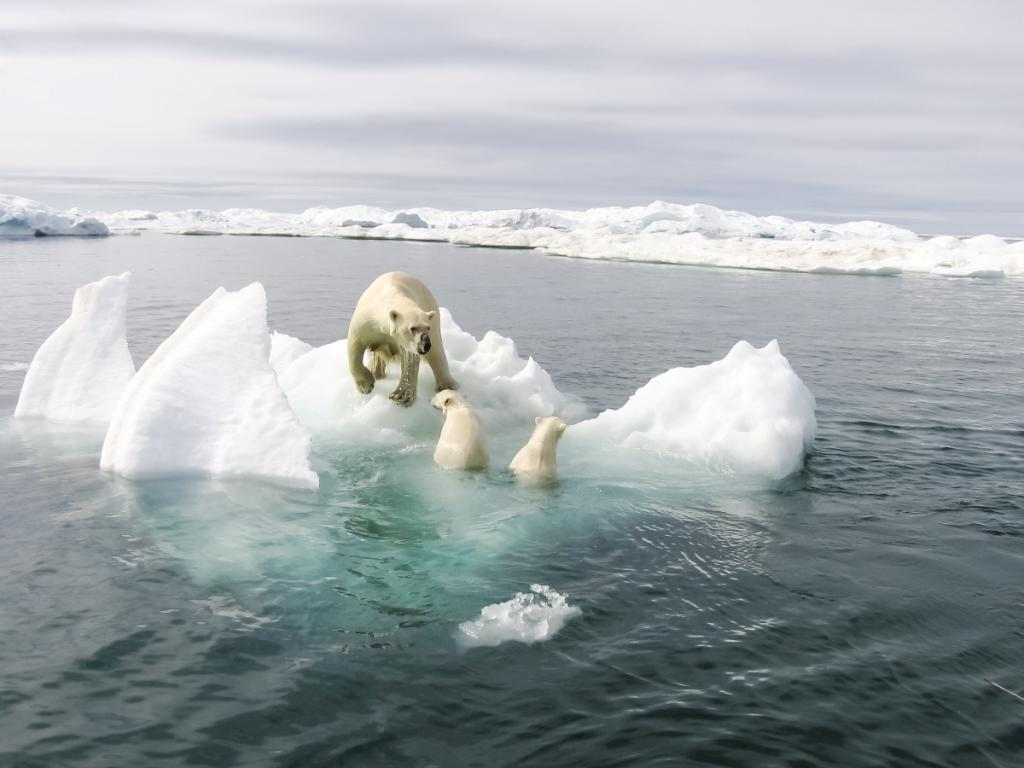 Не только золото, углеводороды и урановые руды: ученые рассказали о главном богатстве Арктики